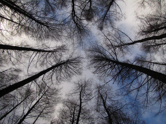 glencoe trees winter 2 700x525 - On music, travel, Frightened Rabbit, & Scott Hutchison