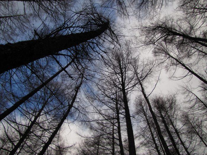 glencoe trees winter 3 700x525 - On music, travel, Frightened Rabbit, & Scott Hutchison