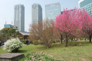 hamarikyu gardens cherry blossoms tokyo 300x200 - Travel Contests: April 10, 2019 - Japan, France, Antigua, & more