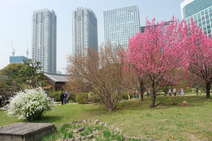hamarikyu gardens cherry blossoms tokyo 700x467 - Travel Contests: April 10, 2019 - Japan, France, Antigua, & more