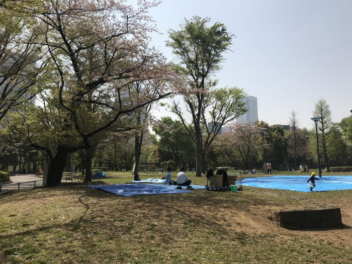shinjuku chuo park cherry blossoms tokyo 700x525 - The 10 best places to see cherry blossoms in Tokyo, Japan