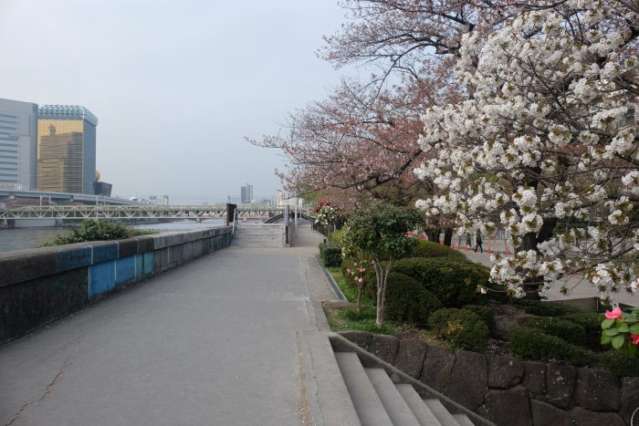 sumida park cherry blossoms tokyo 700x467 - The 10 best places to see cherry blossoms in Tokyo, Japan
