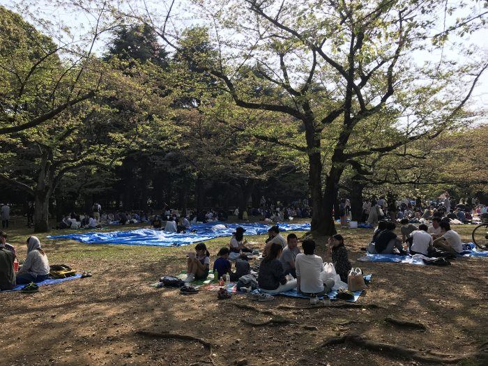 yoyogi park cherry blossoms tokyo hanami 700x525 - The 10 best places to see cherry blossoms in Tokyo, Japan