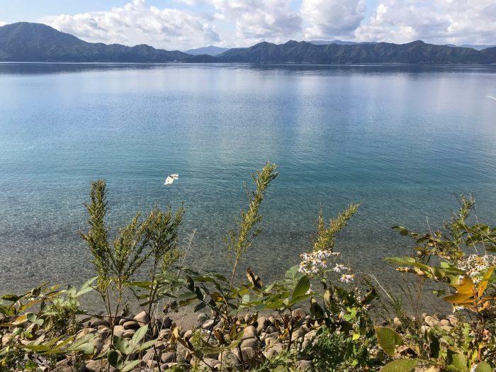 lake tazawa butterflies 700x525 - A day trip from Morioka to Lake Tazawa, Japan