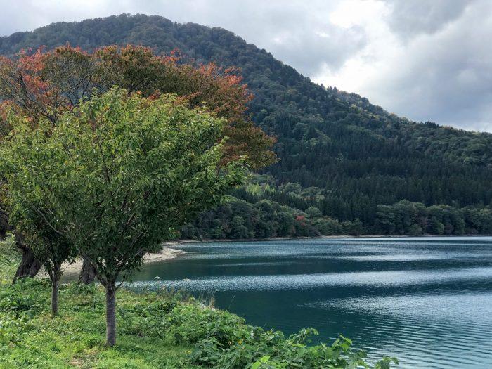 lake tazawa trees 700x525 - A day trip from Morioka to Lake Tazawa, Japan
