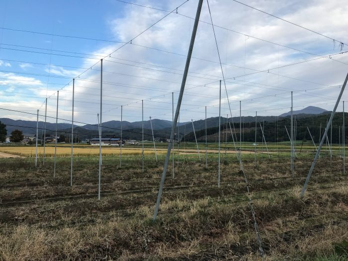 hop fields tono 700x525 - The best craft beer in Tono, Japan