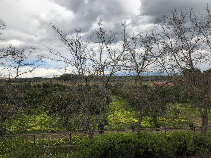 tenuta del gelso orchards 700x525 - Orange groves & wine tasting at Tenuta Del Gelso in Catania, Sicily