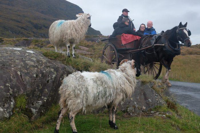 gap of dunloe horse cart jaunting 700x467 - The Gap of Dunloe & Killarney Lakes - Ireland at its most beautiful