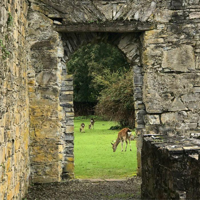 innisfallen abbey deer 700x700 - The Gap of Dunloe & Killarney Lakes - Ireland at its most beautiful