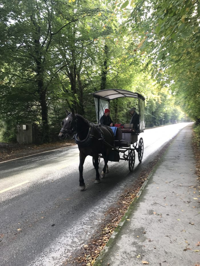 jaunting car killarney horse cart ross castle 700x933 - Ross Castle & Ross Island in Killarney, Ireland