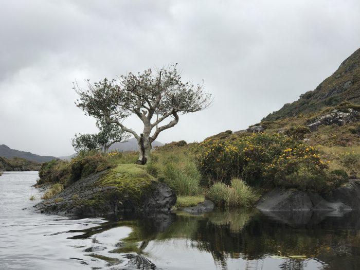 lakes of killarney boat tour 700x525 - The Gap of Dunloe & Killarney Lakes - Ireland at its most beautiful