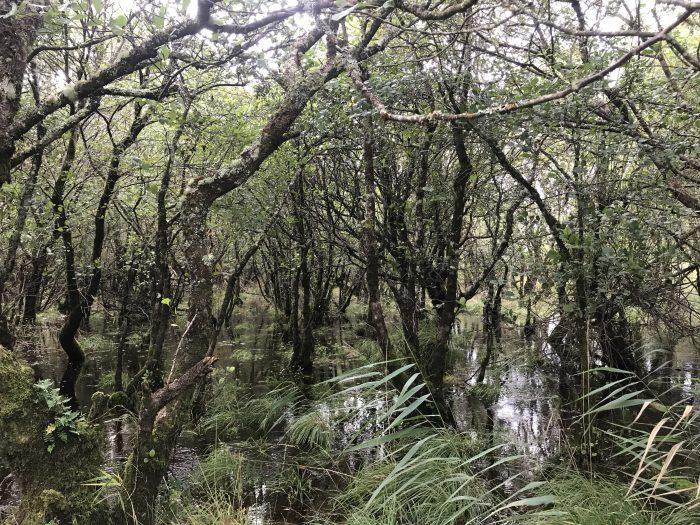 ross island marsh 700x525 - Ross Castle & Ross Island in Killarney, Ireland